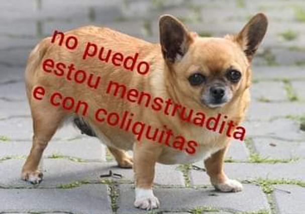 Gordito y cansadito: destrinchamos a criação do melhor meme do momento (Foto: Reprodução/Instagram)